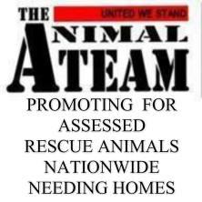 animalteaem