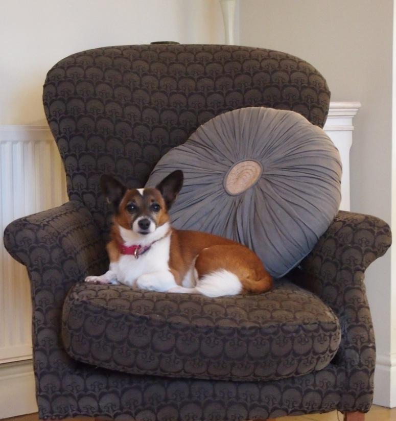 littlehound.jpg