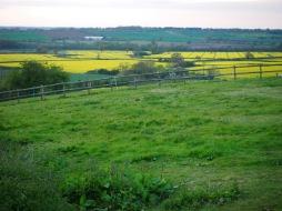 Evie Blossom's Field
