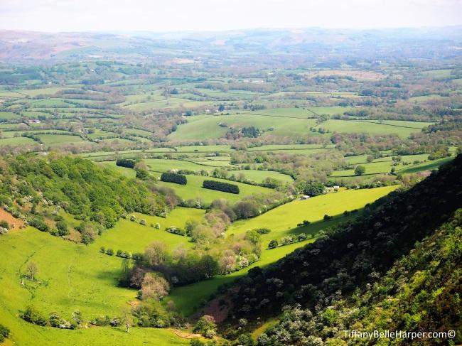 Welsh Mountain