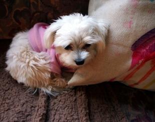 Cosy Evie Blossom (snuggled up)