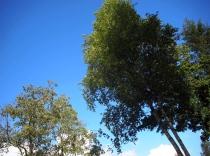 More Trees outside Annona
