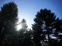 Fir Trees outside Annona