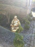 Mr Buddha