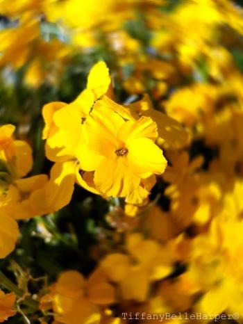 Yellow Flowers so pretty