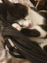 chief asleep on my handbag