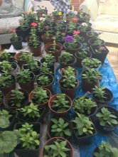 mum and dad potting from the greenhouse
