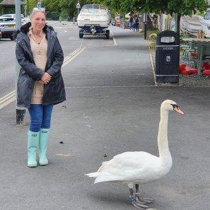 Huge Swan
